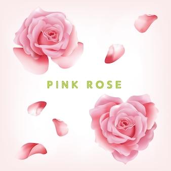 Collection de fleurs roses roses