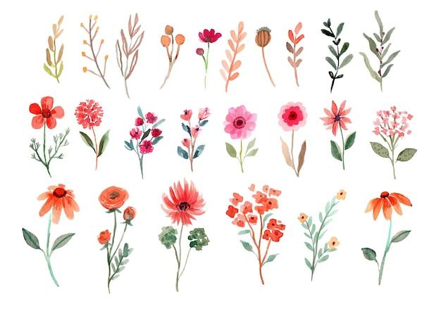 Collection de fleurs sauvages aquarelle