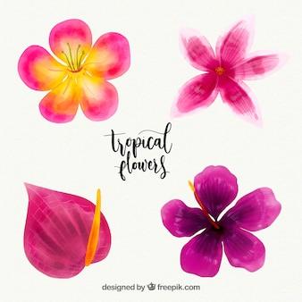 Collection de fleurs tropicales dans un style aquarelle