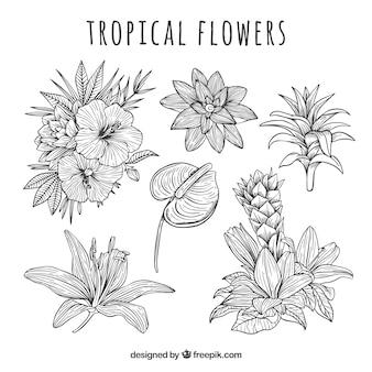 Collection de fleurs tropicales dans un style dessiné à la main