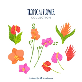 Collection de fleurs tropicales dessinés à la main belle