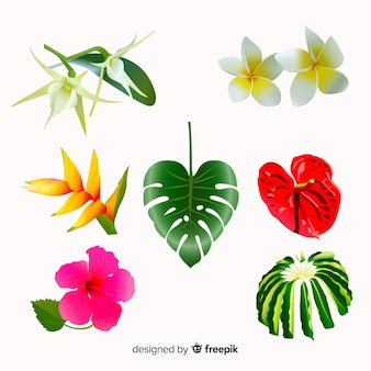 Collection de fleurs tropicales