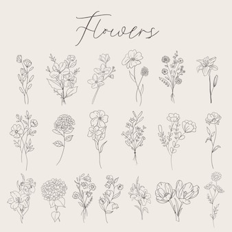 Collection de fleurs