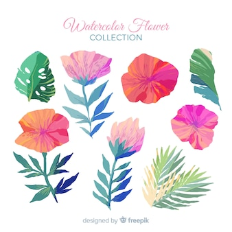 Collection florale aquarelle