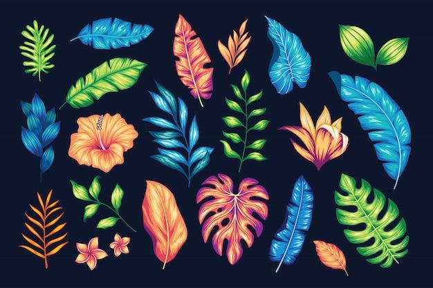 Collection florale dessinée belle main vintage