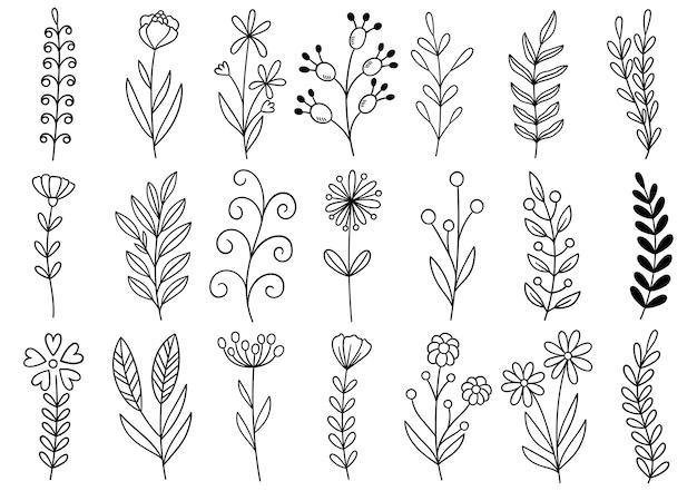 Collection forêt fougère eucalyptus art feuillage naturel laisse des herbes dans le style de ligne. fleur dessinée à la main