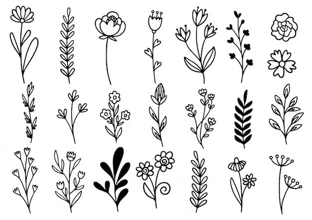Collection forêt fougère eucalyptus art feuillage naturel laisse des herbes dans le style de ligne. illustration élégante de beauté décorative pour fleur dessinée à la main