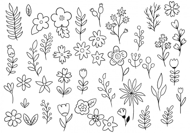 Collection de fougères forestières eucalyptus art feuillage feuilles naturelles herbes dans le style de ligne
