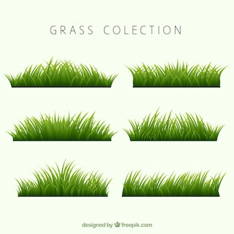 Collection des frontières d'herbe réalistes
