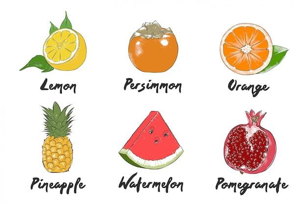 Collection de fruits bio de style gravé de vecteur