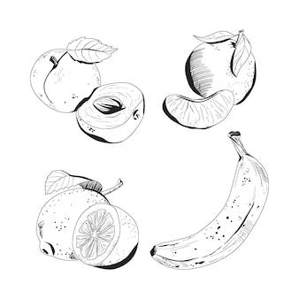 Collection de fruits dessinés à la main de gravure