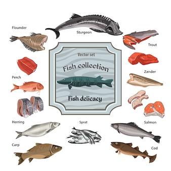 Collection de fruits de mer colorés dessinés à la main