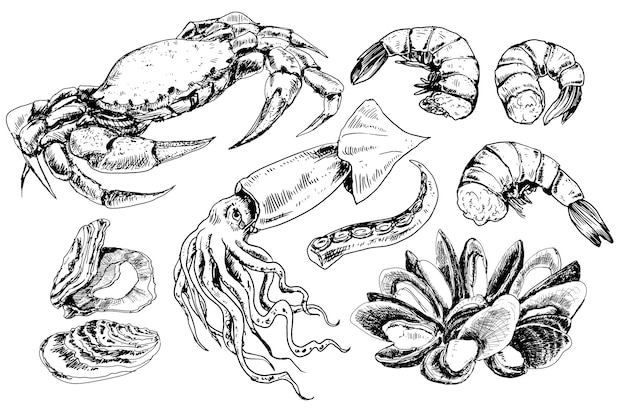 Collection de fruits de mer dessinés à la main