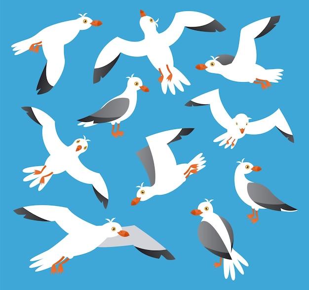 Collection de goélands, oiseaux de mer de l'atlantique