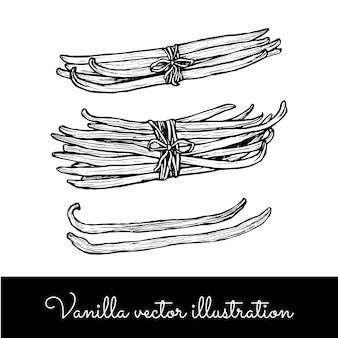 Collection de grappes de bâtons de vanille vintage
