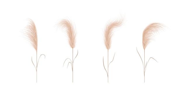 Collection D'herbe De La Pampa. éléments D'ornement Floral Dans Un Style Bohème. Vecteur Premium