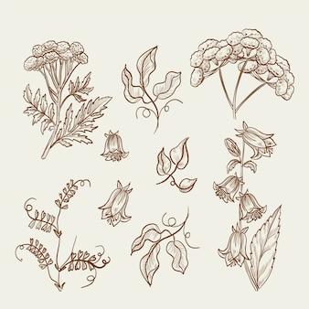 Collection d'herbes botaniques et de fleurs sauvages