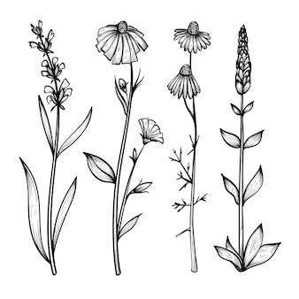 Collection d'herbes dessinées à la main et de fleurs sauvages réalistes