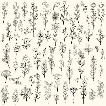 Collection d'herbes et de fleurs de doodle vectorisées à main