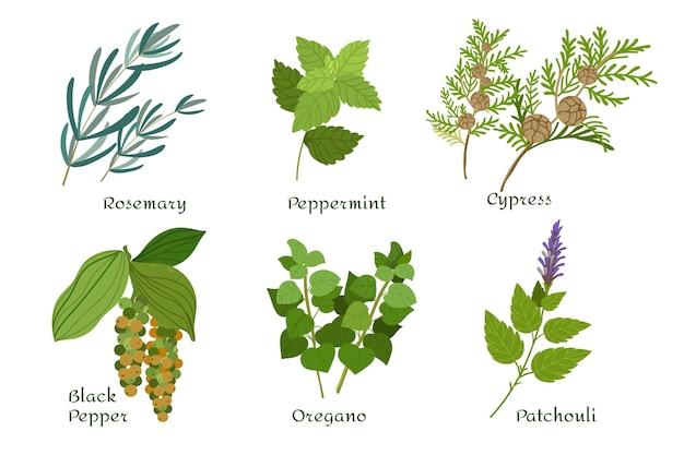 Collection d'herbes d'huile essentielle de design plat