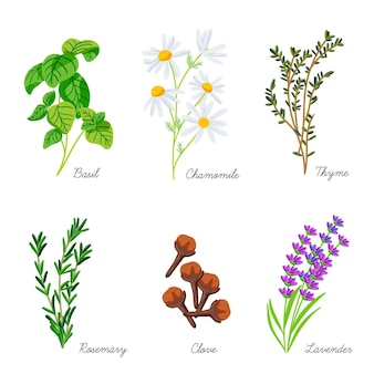 Collection d'herbes d'huile essentielle à main plate