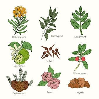 Collection d'herbes d'huile essentielle