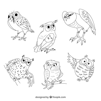 Collection de hibou outline de six