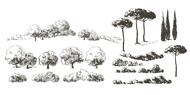 Collection d'île d'arbres réalistes avec des feuilles. verger, plantes fruitières, arbustes.