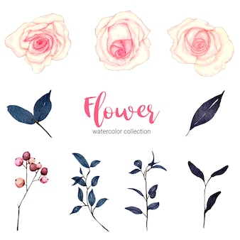 Collection d'illustration aquarelle belle fleur