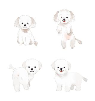 Collection d'illustrations de chien maltais