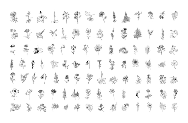 Collection d'illustrations monochromes de plantes en style croquis