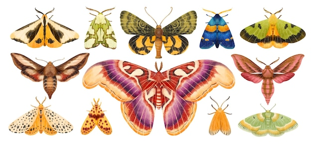Collection d'illustrations peintes à la main aquarelle papillon papillon