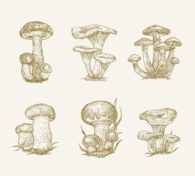 Collection d'illustrations vectorielles de champignons dessinés à la main champignons miel champignons orange cap cèpes ...
