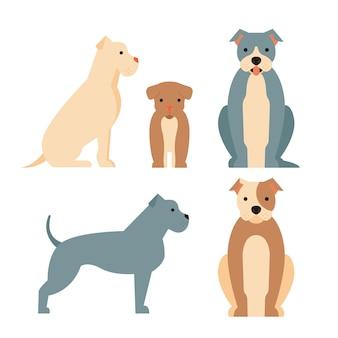 Collection illustrée de pitbull design plat