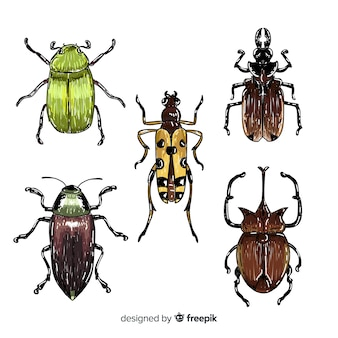 Collection d'insectes colorés dessinés à la main