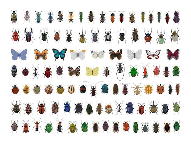 Collection d'insectes colorés réalistes.