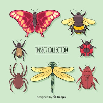 Collection d'insectes colorés