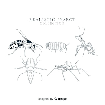Collection d'insectes réalistes dessinés à la main