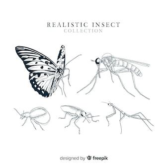 Collection d'insectes réalistes dessinés à la main