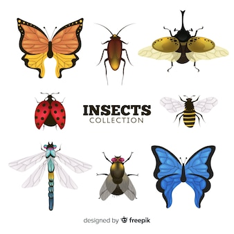 Collection d'insectes réalistes