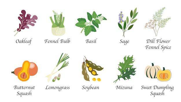 Collection isolée d'épices de nourriture végétale de santé de nature organique