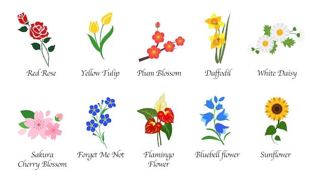 Collection isolée de fleurs de jardin botanique nature organique