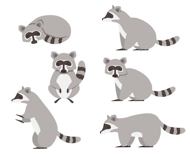 Collection isolée de raton laveur mignon. jeu de caractères animaux.