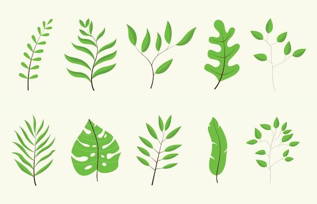 Collection de jeu d'arbres verts feuilles ou feuilles avec illustration vectorielle de couleur blanche