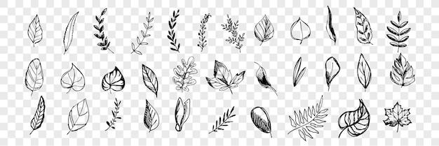 Collection de jeu de feuilles d'arbres dessinés à la main différents. stylo ou crayon, feuilles d'arbres dessinés à la main d'encre. croquis de divers éléments botaniques de forme isolés.
