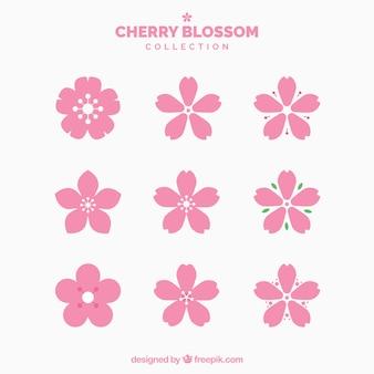 Collection de jolies fleurs de cerisier
