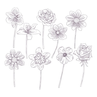 Collection de jolies fleurs dessinées à la main