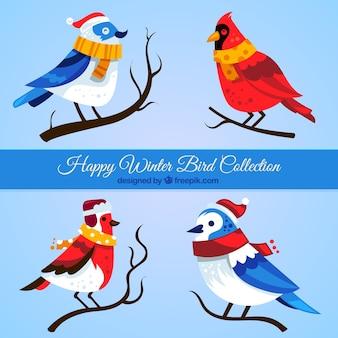 Collection de jolis oiseaux avec des foulards