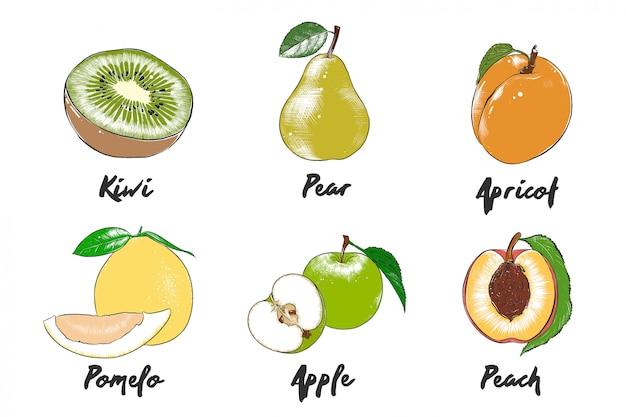 Collection de légumes biologiques de style gravé