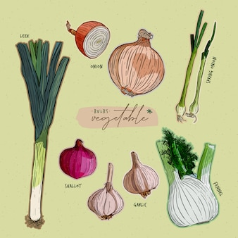 Collection de légumes bulbes. croquis de tirage à la main.